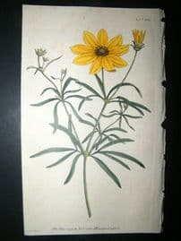 Curtis 1791 Hand Col Botanical Print. Whorled Coreopsis 156