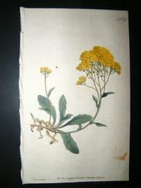 Curtis 1791 Hand Col Botanical Print. Yellow Alyssum 159