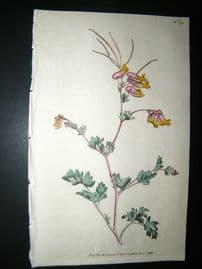 Curtis 1792 Hand Col Botanical Print. Glaucou's Fumitory 179