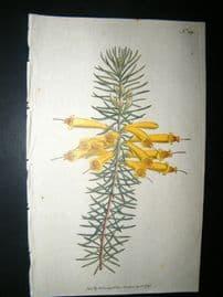 Curtis 1792 Hand Col Botanical Print. Great-Flowered Heath 189