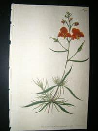 Curtis 1792 Hand Col Botanical Print. Linear-Leav'd Celsia 210