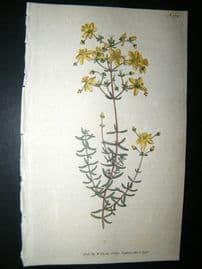 Curtis 1792 Hand Col Botanical Print. St. John's Wort 178