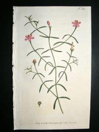 Curtis 1793 Hand Col Botanical Print. Berry Bearing Chironia 233