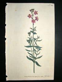 Curtis 1793 Hand Col Botanical Print. Clammy Buchnera 217