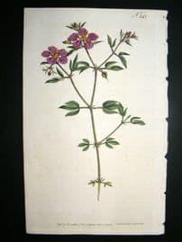 Curtis 1793 Hand Col Botanical Print. Cretian Fagonia 241