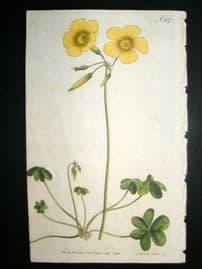 Curtis 1793 Hand Col Botanical Print. Goats Foot Wood Sorrel 237