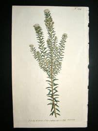 Curtis 1793 Hand Col Botanical Print. Heath Leaved Phylica 224