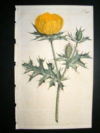 Curtis 1793 Hand Col Botanical Print. Prickly Poppy 243
