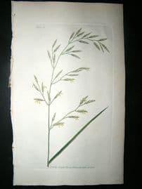 Curtis: 1804 Hand Col Botanical Print. Meadow Fescue Grass 5