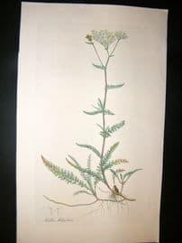 Curtis Flora Londonensis 1817 Folio HC Botanical. Achillea Millefolium. Yarrow
