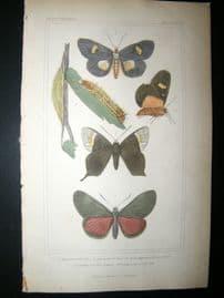 Cuvier C1835 Antique Hand Col Print. Argarista, Coronis, Castnia, 96 Moths