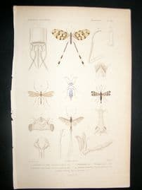 Cuvier C1840 Antique Hand Col Print. Insects 102