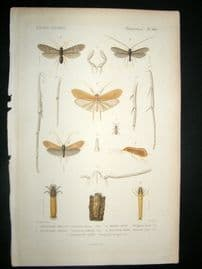 Cuvier C1840 Antique Hand Col Print. Insects - 106