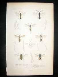 Cuvier C1840 Antique Hand Col Print. Insects 114