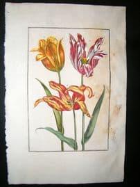 Daniel Rabel 1771 Folio Hand Col Botanical. Marbled & Yellow Tulips 10