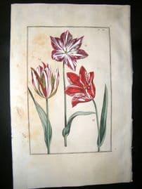 Daniel Rabel 1771 Folio Hand Col Botanical. Marbles & Scarlet Tulip 11