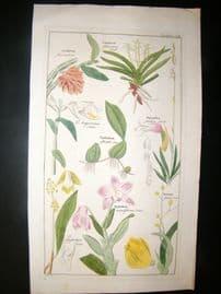 David Dietrich 1831 Folio Hand Col Botanical Print. Orchids 202