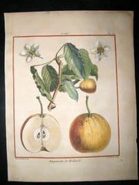 Duhamel du Monceau 1768 H/Col Fruit Print. Bergamotte De Hollande, Pear 25