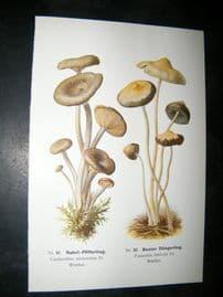 Edmund Michael Fungi C1900 Mushroom Print. Nabel-Pfifferling