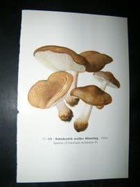 Edmund Michael Fungi C1900 Mushroom Print. Schwarzlich-weiber Ritterling