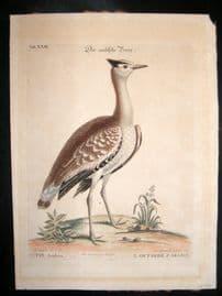 Edwards Seligmann C1760 Folio Hand Col Bird Print. Arabian Bustard