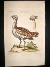 Edwards Seligmann C1760 Folio Hand Col Bird Print. Male Bustard