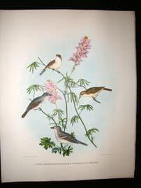 Elliot Birds of North America 1869 LG Folio H/Col Print. Vireos