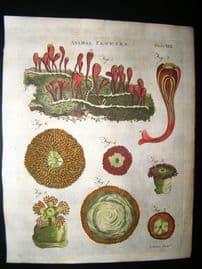 Encyclopaedia Britannica C1790 Hand Col Botanical Print. Animal Flowers