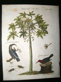 Encyclopaedia Britannica C1790 Hand Col Botanical Print. Papaya Tree & Birds