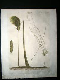 Encyclopaedia Britannica C1790 Hand Col Botanical Print. Papayrus