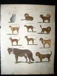 Encyclopaedia Britannica C1790 HC Print. Canis. King Charles, Pug, Turkish Dogs