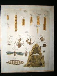 Encyclopaedia Britannica C1790 HC Print. Toenia, Termes. Tapeworm, Insects