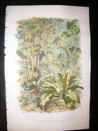 Eugene Blery C1855 LG Folio Botanical Print. Arum, Pandanus, Bambou, Bamboo 4