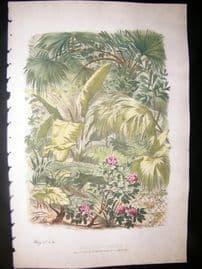 Eugene Blery C1855 LG Folio Botanical Print. Bannana & Palm Tree etc 10
