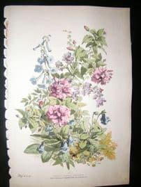 Eugene Blery C1855 LG Folio Botanical Print. Hibiscus, Gloxinia, Gesnearia 18