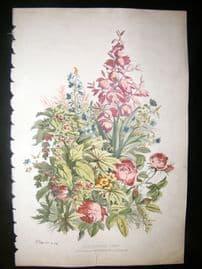 Eugene Blery C1855 LG Folio Botanical Print. Iucca, Lexisteria Formosa 15