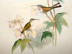 Family of Hummingbirds