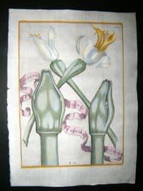Ferrari 1633 Hand Col Botanical Print. Eiusdem Floris et Vaginae Magnitudo 131