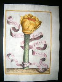 Ferrari 1633 Hand Col Botanical Print. Narcissus Indicus Puniceus 137