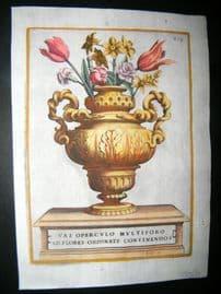 Ferrari 1633 Hand Col Botanical Print. Vase of Flowers 419