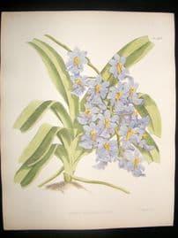 Fitch & Warner Orchid Album 1880s Botanical Print. Aerides Expansum Leoniae 328