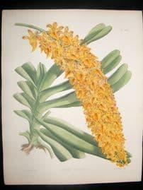 Fitch & Warner Orchid Album 1880s H/Col Botanical Print. Aerides Fieldingii 309