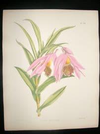 Fitch & Warner Orchid Album 1880s H/Col Botanical Print. Thunia Veitchiana 326