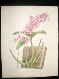 Fitch & Warner Orchid Album 1880s H/Col. Dendrobium Kingianum Album 332