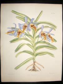 Fitch & Warner Orchid Album 1880s Hand Col Botanical Print. Vanda Cristata 290