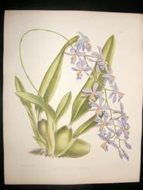 Fitch & Warner Orchid Album 1880s Hand Col Print. Mesospinidium Vulcanicum 317