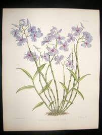 Fitch & Warner Orchid Album 1880s Hand Col. Dendrobium Fytchianum Roseum 336