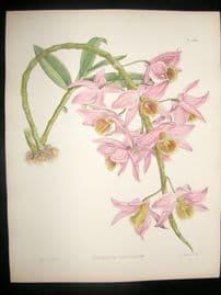 Fitch & Warner Orchid Album 1880s HC Botanical Print. Dendrbium Polyphlebium 299
