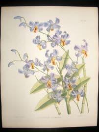 Fitch & Warner Orchid Album 1880s HC Botanical Print. Dendrobium Superbiens 312