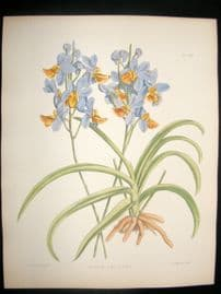 Fitch & Warner Orchid Album 1880s HC Botanical Print. Vanda Amesiana 296